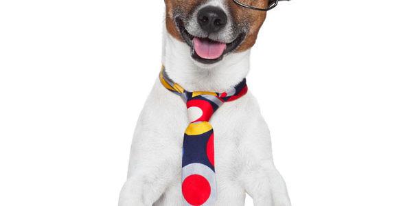 Phil-Philips-dog-editor